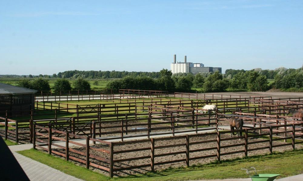 paddocks 2 horses2 fly